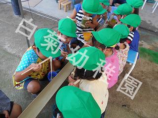 shiragiku-kids-2018-10-18T12_13_12-2.JPG